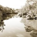 Sabine River Near Big Sandy Texas Photograph Fine Art Print 4106 by M K Miller