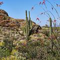 Saguaro National Park East Scene Iv by Kenneth Roberts