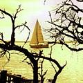 Sailboat Golden Sunset by James Harris