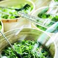 Salad Bar Buffet Fresh Mixed Lettuce Display by Jacek Malipan