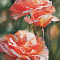 Salmon Colored Roses by Sharon Freeman