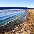 Salton Sea by Sherri Hasley