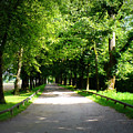 Salzburg Lane by Carol Groenen