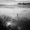 San Clemente Pier by G Wigler
