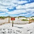 Sand Dunes At Grayton Beach # 4 by Mel Steinhauer