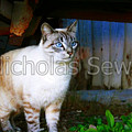 Sapphire Eyed Cat by Nicholas Seward
