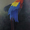 Scarlet Macaw   Three by Odile Kidd