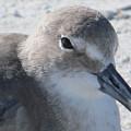 Sea Birds Sanibel Island by Deborah Martin