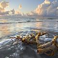 Sea Jewel by Debra and Dave Vanderlaan
