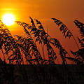 Sea Oats At Sunset by David Lee Thompson
