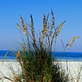 Sea Oats by Gary Wonning