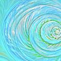 Sea Shell by Paola Correa de Albury
