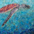 Sea Turtle by Becky Ihlow