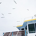 Seagulls Over Ferry Boat by Newnow Photography By Vera Cepic
