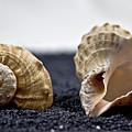 Seashells On Black Sand by Joana Kruse