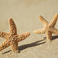 Seastars On Beach by Mary Van de Ven - Printscapes