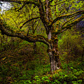 Secluded Tree by Harry Spitz