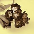 Sepia Flowers by Elvira Ladocki