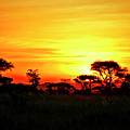 Serengeti Sunset by Bruce Block