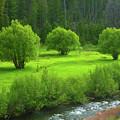 Shades Of Green by Dan Dixon