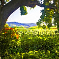 Shady Vineyard by Patricia Stalter