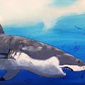 Shark by Sigita Smetonaite