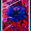 She Wore Blue Velvet by Debra Lynch