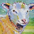 Sheep Head by Mike Jory