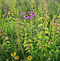 Shelley Kelly Prairie Wildflowers by Ray Mathis
