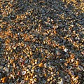 Shells On The Beach In Punta Umbria by Chani Demuijlder