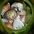 Shells Under Glass by Maria Bonnier-Perez