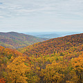Shenandoah Fall Foliage  by Michael Ver Sprill