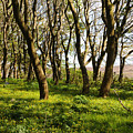 Shetland Woods by Terese Loeb Kreuzer