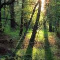 Shining Through by David Lamb
