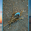 Shore Find by Rich Despins