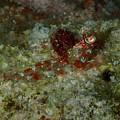 Shrimp by Nina Banks