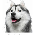 Siberian Husky Poster by Tim Wemple