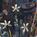 Sierra Wildflowers by Donald Maier