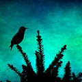 Silhouette Blues by Sylvia Coomes