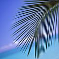 Single Palm Frond by Dana Edmunds - Printscapes