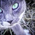 Skitty Cat by Cheryl McClure