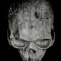 Skull by Edward Fielding