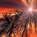 Sky Fire by Mykel Davis