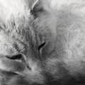 Sleepy by Ed Smith