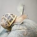 Slug by Elisabeth Derichs