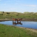 Small Lake With Wild Horses by Chani Demuijlder