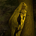 Snake by Svetlana Sewell