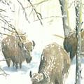 Snow Buffs by Dan Bozich
