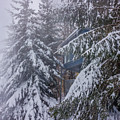 Snow Covered Trees In The North Carolina Mountains During Winter by Alex Grichenko
