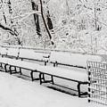 Snow In Central Park Nyc by Susan Candelario